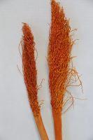 Date jhar color oranžová