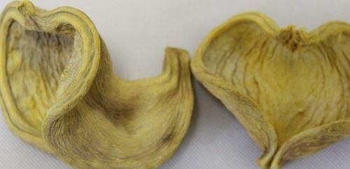 Badam žlutá