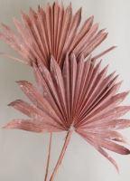 Palm sun spear col. Frosted oranžová